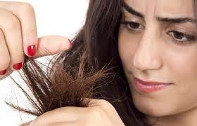 shampo untuk rambut bercabang,shampo rambut bercabang,shampo rambut kering